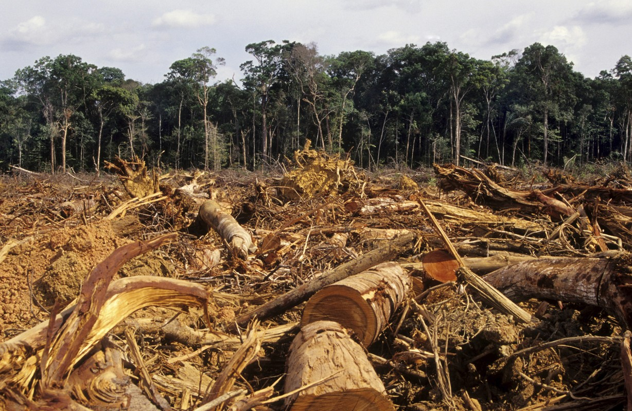 agriculture and current deforestation practices Sustainable agriculture 101 current organic standards leave room for some practices that are not optimal from a sustainable agriculture practices.
